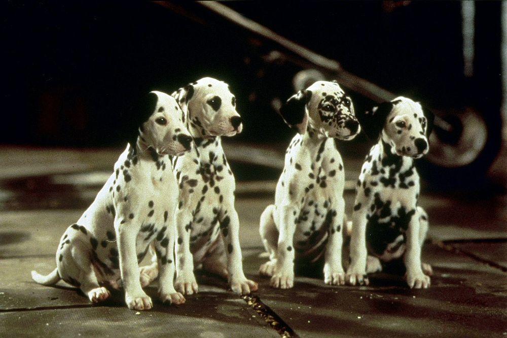 101 dalmatiner diesmal sind die hunde echt. Black Bedroom Furniture Sets. Home Design Ideas
